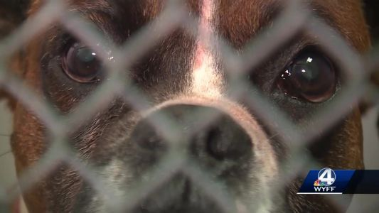 Greenville woman dies after 'brutal attack' by her dogs, deputies say