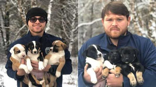6 puppies found abandoned in freezing cold along Kentucky road