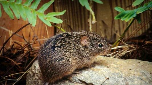 Hantavirus claims first life of the year, killing McKinley County woman