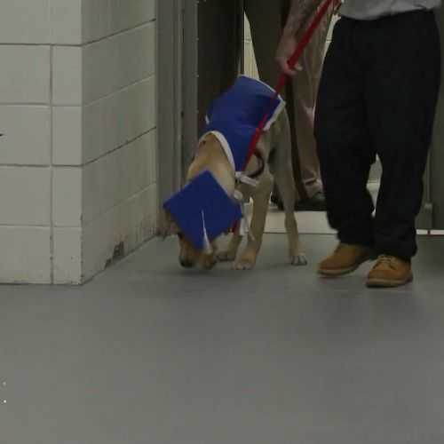 Video: Graduation ceremony held for dogs at Merrimack County Jail