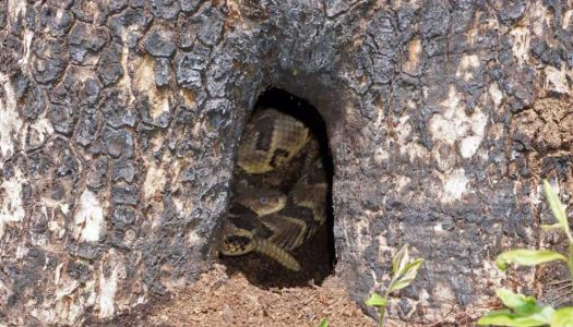 Likelihood of encountering snakes in Upstate increasing, DNR says