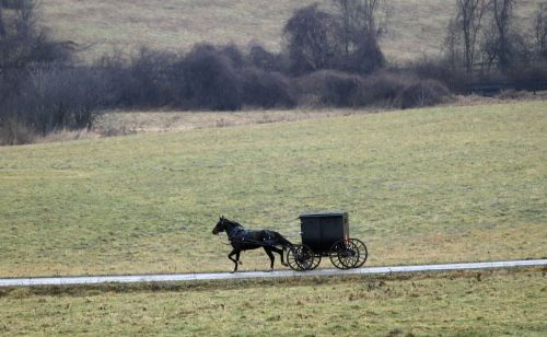 Mother and father killed, 8 children injured after Amish family's buggy was rear-ended