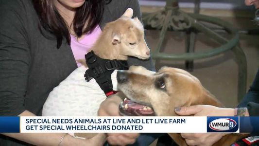 Special-needs animals at Chichester sanctuary get wheelchairs donated