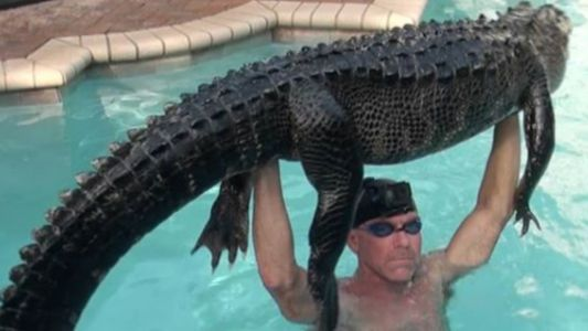 Florida man jumps in swimming pool to remove nearly 9-foot gator