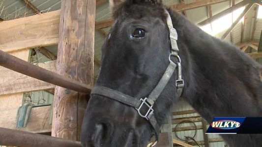 2 teens charged after pair of horses shot, 1 dead, in Hardin County