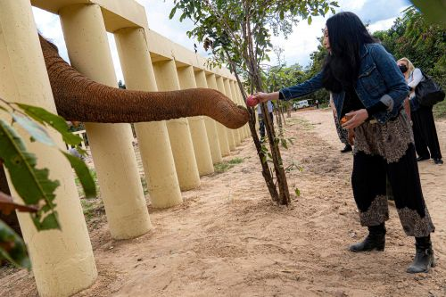 Cher feeds 'world's loneliest elephant' at his new home in Cambodia