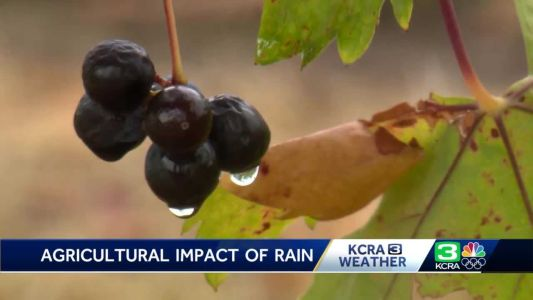 'It's fantastic': San Joaquin County farmers welcome wet weather