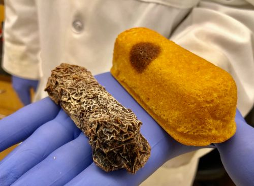 The myth of the immortal Twinkie is dead, thanks to a new analysis of moldy snack cakes