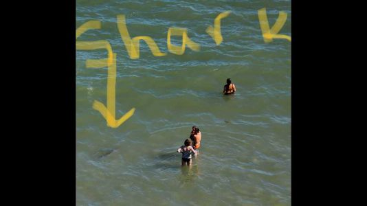 People in water at Myrtle Beach unaware of sharks lurking inches away