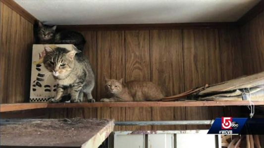 31 cats rescued from Fitchburg home