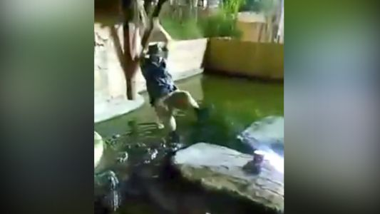 Man plunges into gator-infested pool after rope swing snaps during performance