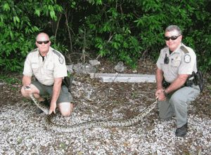 Wildlife officials remove 5,000 pythons from Florida Everglades