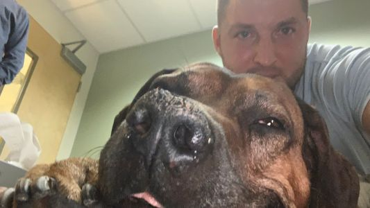 Tim Tebow shares touching tribute to Bronco, 'one of the best dogs ever'