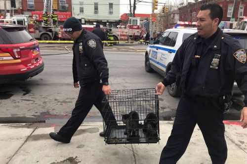 Firefighters rescue 2 cats from massive Brooklyn blaze