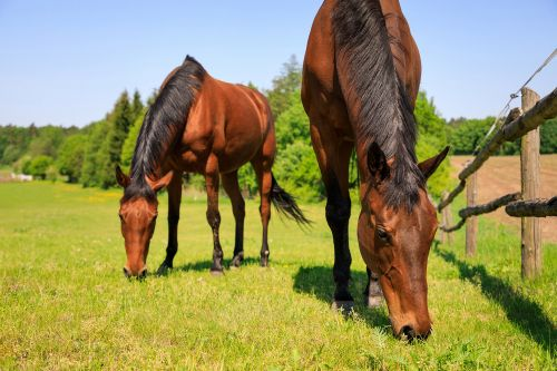 Uncle Sam offering $1K to people who adopt untrained wild horse or burro