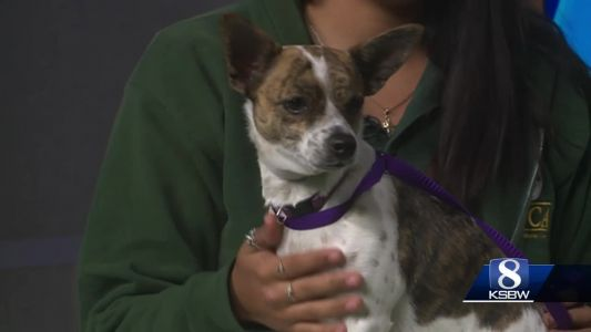 Pet of the Weekend: Sugar