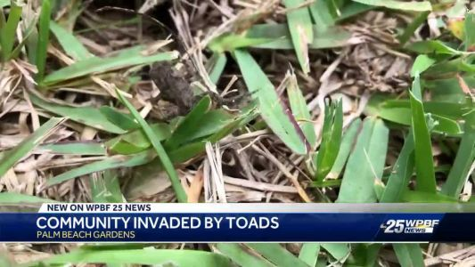 Plague of poisonous toads infest suburban Florida neighborhood