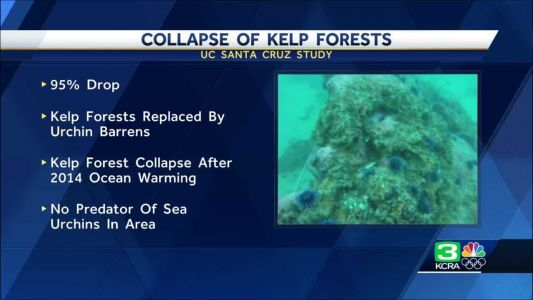Satellite images show kelp forest off California almost gone