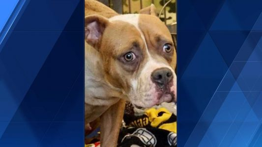 Dog found tied to dumpster in Pittsburgh