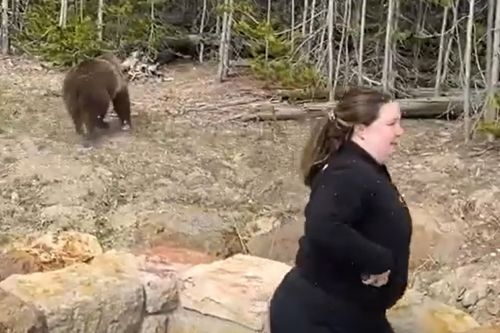 Yellowstone tourist charged for getting illegally close to grizzly bear