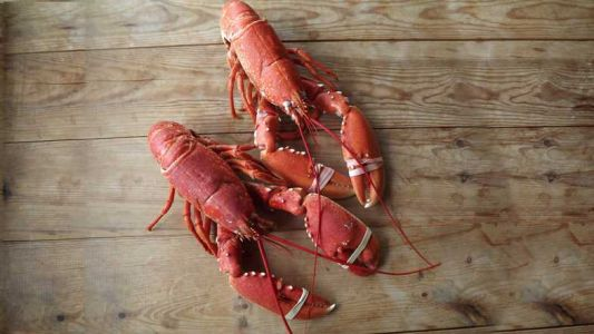 Great American Lobster Festival coming to Deer District