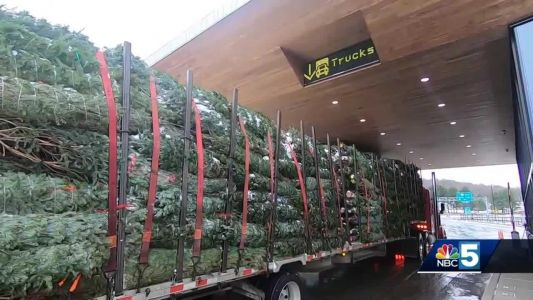 Canada border closure not stopping Christmas tree imports