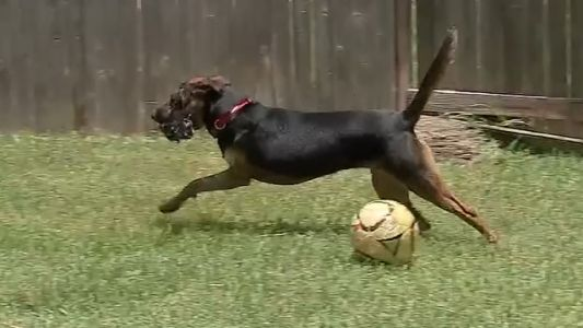 Three-legged dog back with family after being gone for 9 days