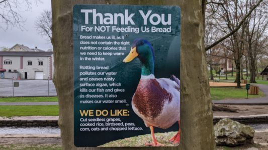 Lititz Springs Park asks visitors to be careful about what they feed to ducks