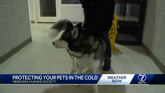 Keeping pets safe in winter weather