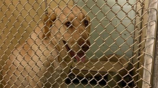 Animal Shelters Urge Humans Confined To Home By Coronavirus Outbreak To Adopt