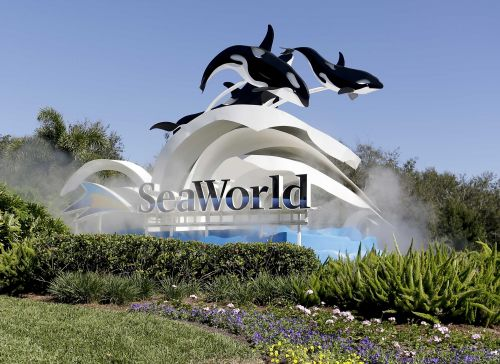 SeaWorld CEO resigns after just 5 months on the job
