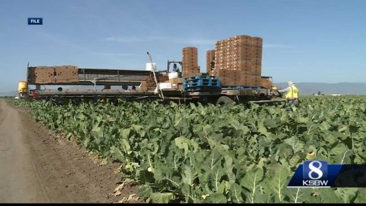 First of its kind study looks into COVID-19 prevalence in Salinas Valley farmworkers