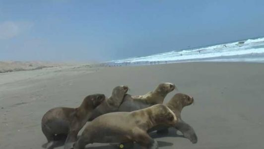 Aww! Group of 6 sea lions released back into the wild, video shows