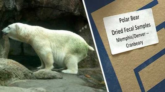 Cincinnati is home to the largest collection of polar bear poop in the world - for science