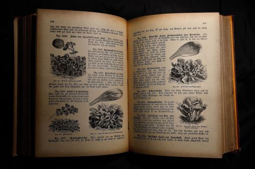 Discovering the Allure of Cookbooks: Why They're Still Worth Buying