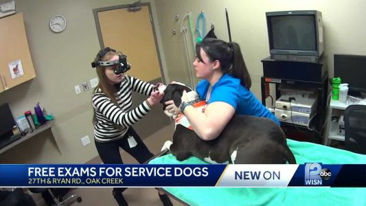 Vets offer free eye exams to service dogs