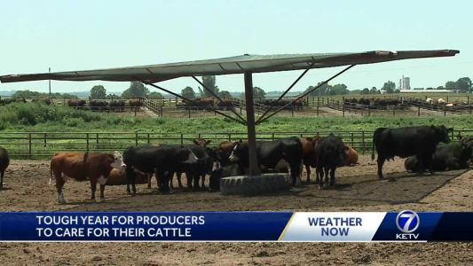 Tough year for producers to care for cattle