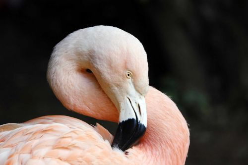 Report: Flamingo in zoo had to be put down after child threw a rock at it