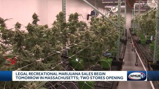 Legal recreational marijuana sales to begin tomorrow in Massachusetts