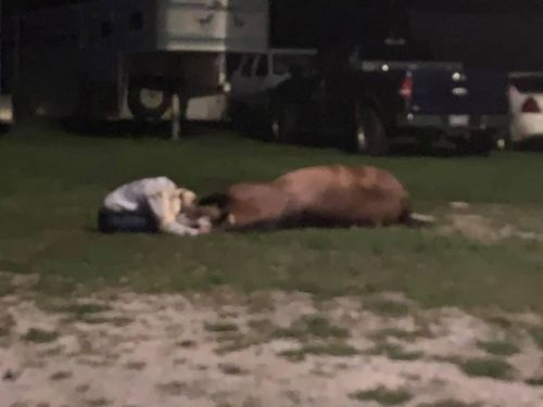 Mystery disease kills 4 horses, sickens a dozen others at Hertford, NC stable