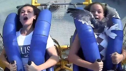 MUST WATCH: Seagull smacks teen in the face when amusement park ride takes off