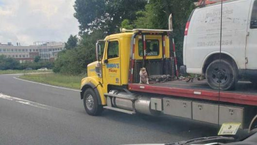 Photo shows dog on back of moving tow truck on Route 128