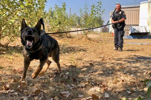 These police dogs are using body cams to stop crime