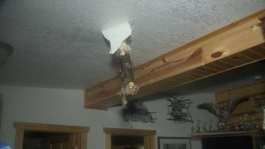 EF1 tornado sends tree through family's kitchen ceiling