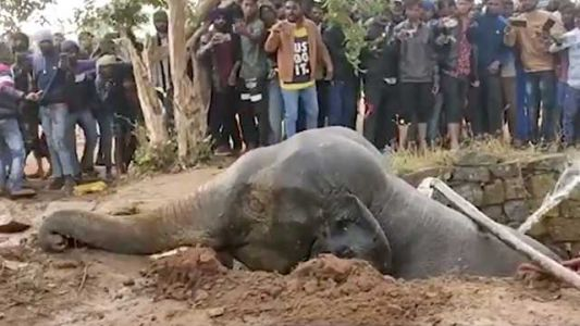 Whoa! Ingenious elephant rescue uses water to save the day, video shows