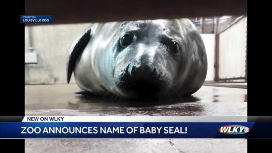 Louisville Zoo announces names of new baby seal: Finsbay
