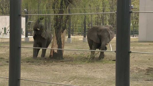 As other zoos phase out elephant exhibits, Milwaukee County bets future on theirs