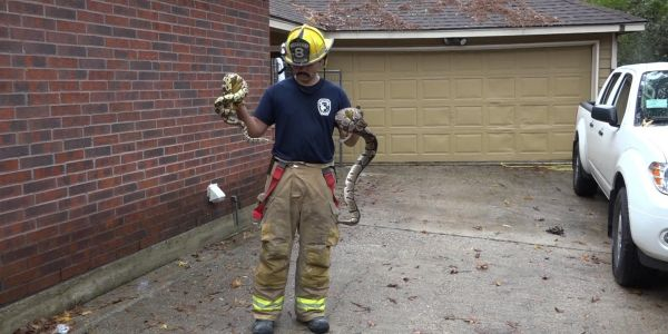 Firefighters rescued more than 100 snakes from a burning house in Texas that the owner had kept as pets