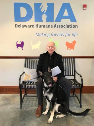 Former vice president Biden, wife adopt rescue dog named Major