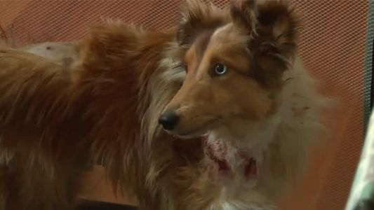Coyotes attack family pet in Anderson Township